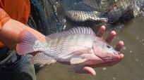 Cách phòng trị 7 bệnh thường gặp trên cá nuôi nước ngọt