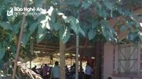 Nghệ An: Đột kích sới gà, bắt giữ 20 con bạc