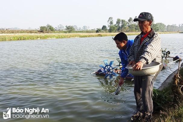 Nghệ An: Nông dân Yên Thành nuôi cá rô phi VietGAP đạt sản lượng 20 tấn/ha